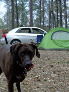 Clear Springs Campground was a good call. Here I am waiting for my master to get supper ready.